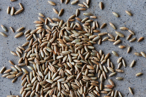 Rye, Organic Wholegrain - Hodmedod's British Pulses & Grains