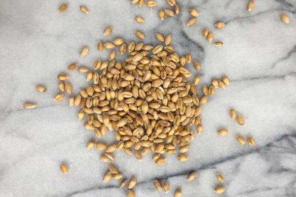 Milling Wheat, Squareheads Master, Wholegrain - Hodmedod's British Pulses & Grains