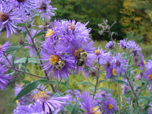 Pollinator Workshop with Meg Miller