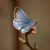 New Hampshire Butterfly Survey