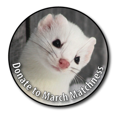 It's March MATCHness at NH Audubon!