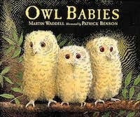 Children's Book Owl Babies