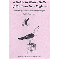 A Guide to the Winter Gulls of Northern New England