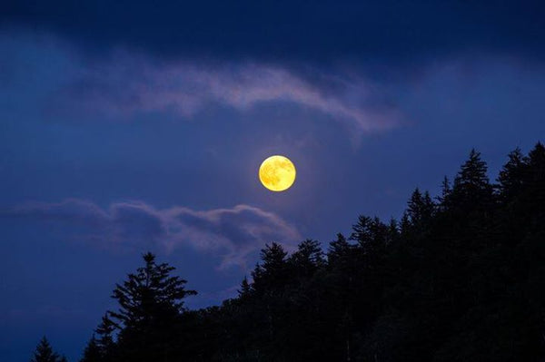 McLane Center Full Moon Hike February 21, 2019