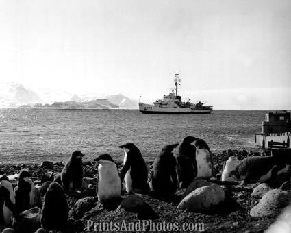 Great  Penguins & US Coastguard 0879