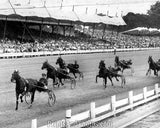 HARNESS Horse Racing GOLD TIME  1582