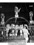 Ringling Circus Lion Trainer  18280
