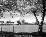 Jefferson Memorial Washington DC  2848