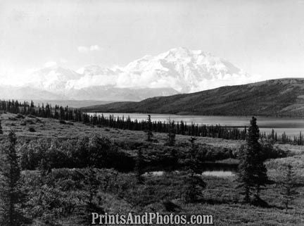MT McKINLEY Trees 1950s  3093