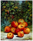 Apples Fine Art Print  4535