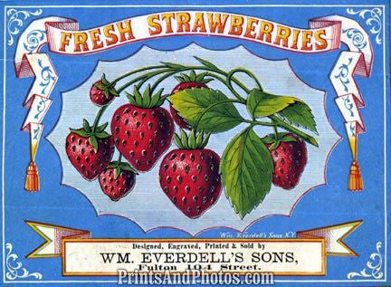 Fresh Strawberries Ad 4604
