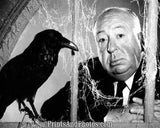 Alfred Hitchcock The Birds  5358