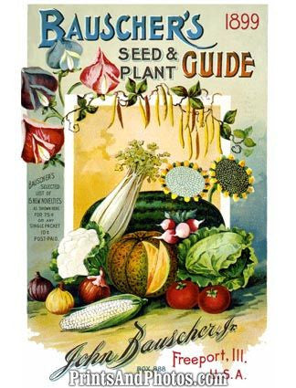 Bauschers Seed & Plant Guide Ad 5389