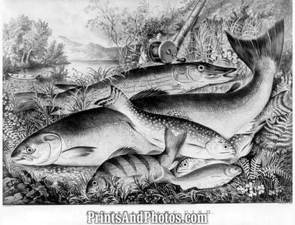 Currier & Ives Game Fish  5440