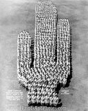 Cactus 35th Infantry Insignia Print 5687