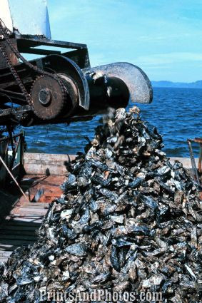 Oyster Dredge Willapa Bay WA  7256