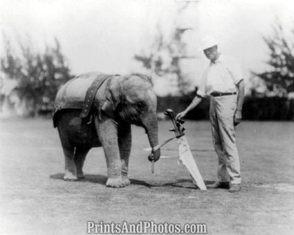 Elephant Caddie Golf Photo 7329