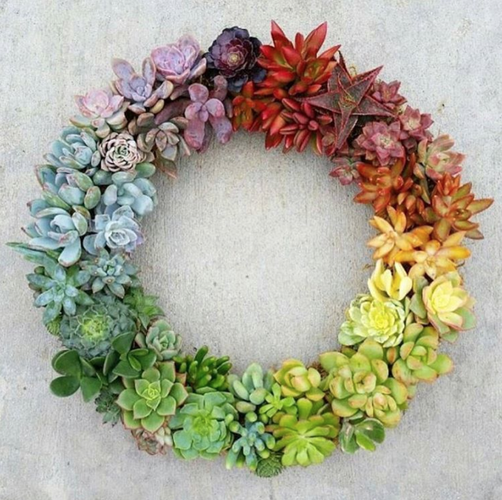 rainbow succulent wreath.  growing succulents - plants that are easy to grow and come in a variety of colors and textures.  create a little garden today.