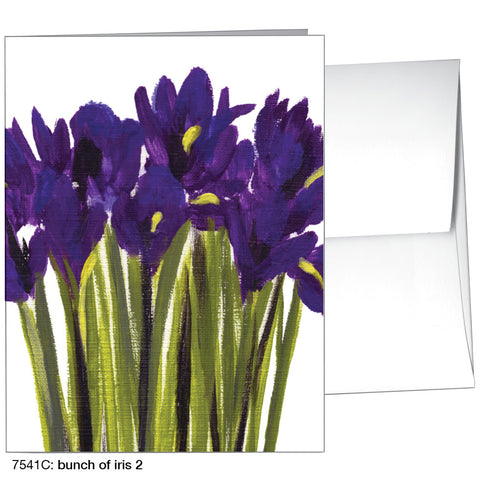 bunch of iris 2 (#7541C)