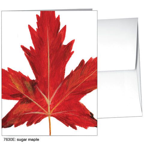sugar maple (#7630E)