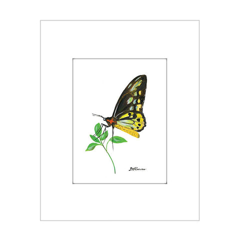 cairns birdwing (#7675)
