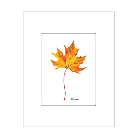 maple leaf (#7623)