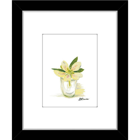 yellow white hellebore (#7144A)
