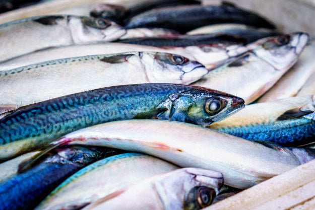 Mercury Levels in Fish | Know About the Mercury Levels in Fish | Fish Consumption