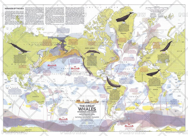 Great Whales, Migration and Range  -  Published 1976