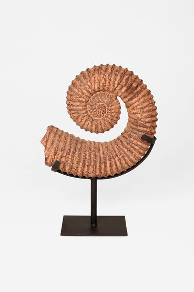 Ammonite Stone Sculptures