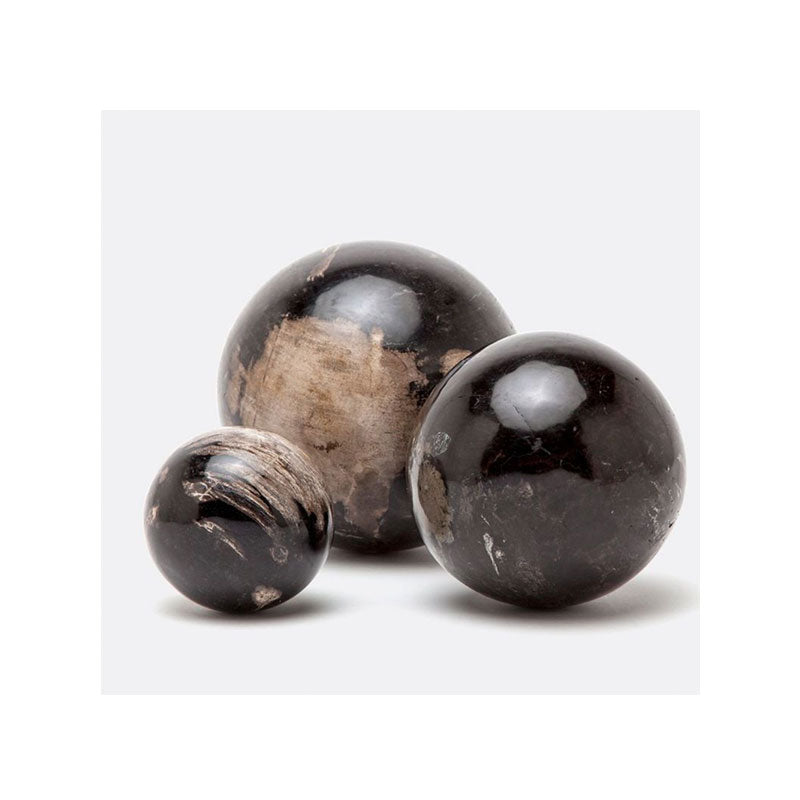 Black Petrified Wood Sculptures, Round Set