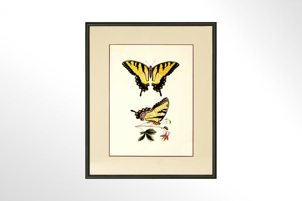 Butterfly Print Collection