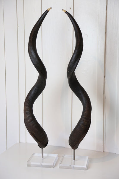 Natural Kudo Horns