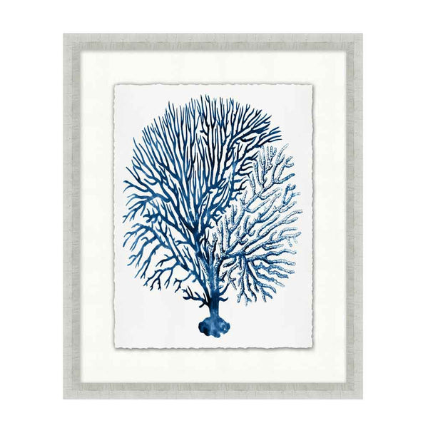 Blue Sea Fan Collection
