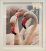 Camargue Flamingos- Dragana Connaughton