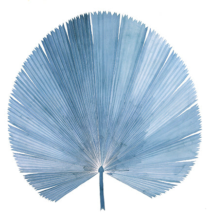 Lizzi Connaughton- Giant Fan Palm Watercolor
