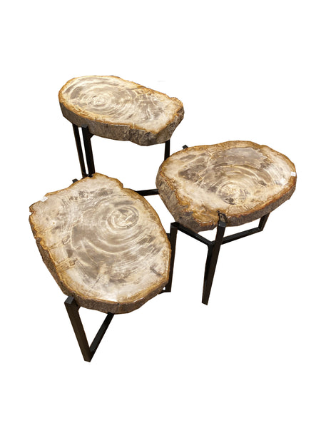 Petrified Wood Side Tables with Black Base- Thick