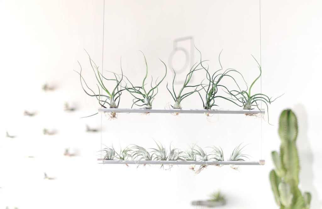 Elevate Air Plant Shelf