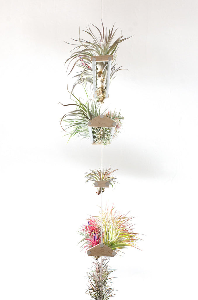 Air Plant Wire