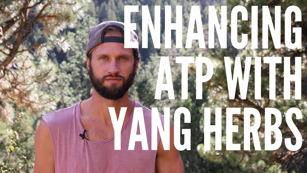 Enhancing ATP with Yang Herbs: Cistanche, Cuscutae & Cordyceps