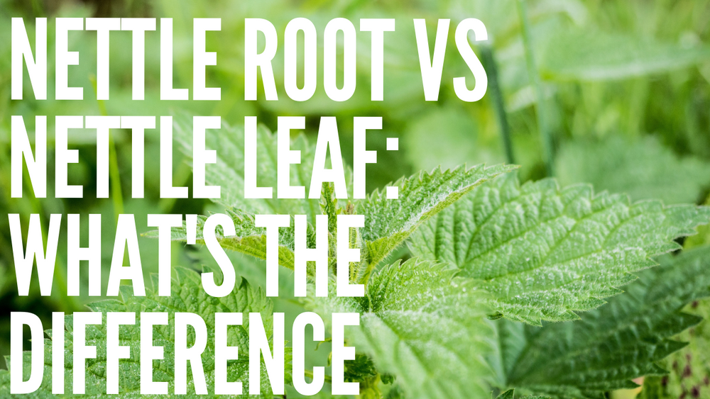 Nettle Root Versus Nettle Leaf: What's the Difference