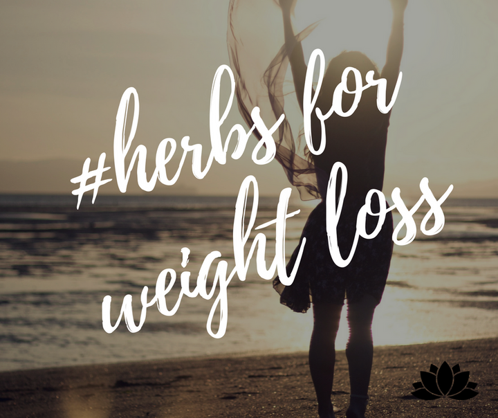 Top 3 Chinese Herbs for Weight Loss Support