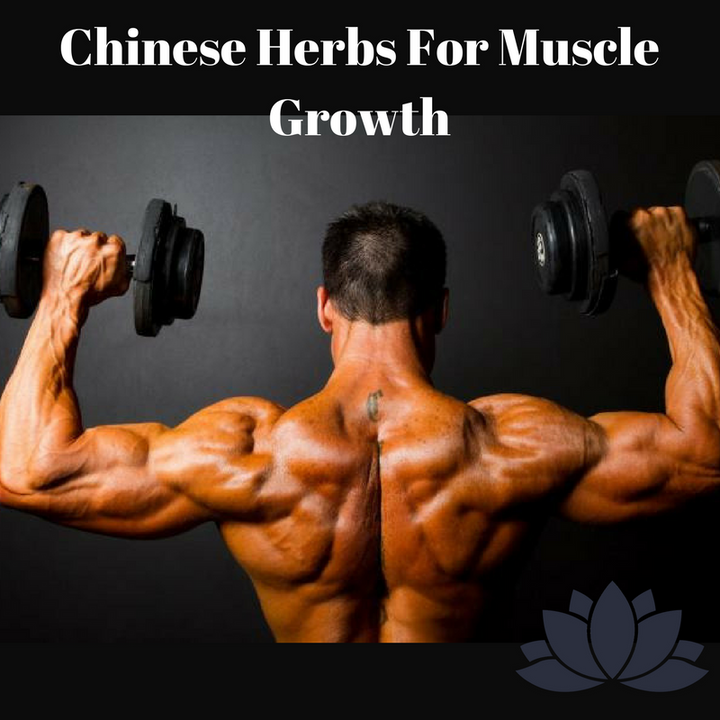 Chinese Herbs For Muscle Growth