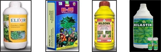 Biological control agents to control powdery mildew in crops