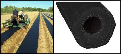 Black plastic mulch