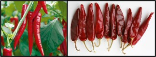 Hot Pepper or Red chilli