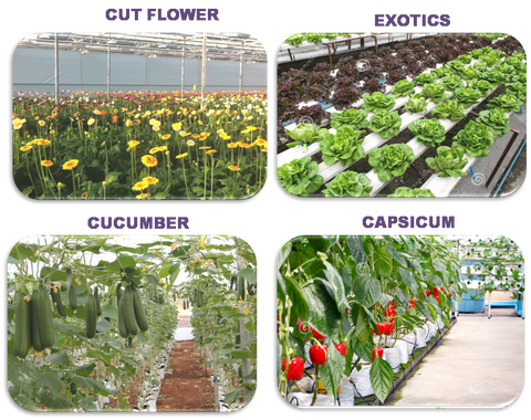 Polyhouse Cultivation Tips Bighaat Com
