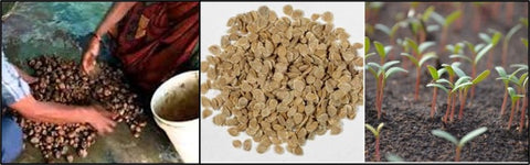 Seed materials