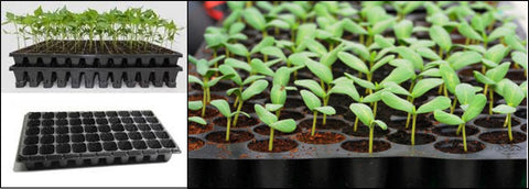 Seedlings trays