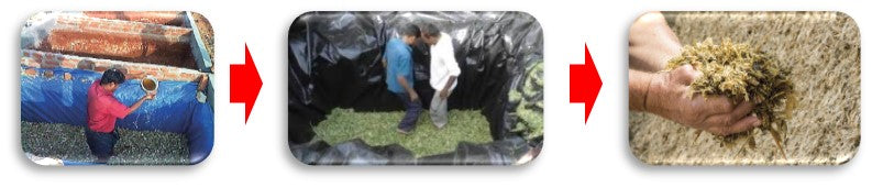 Silage process